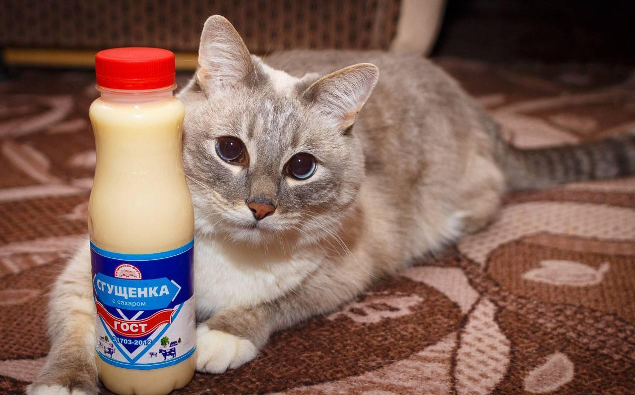 Можно ли котам сгущенку?