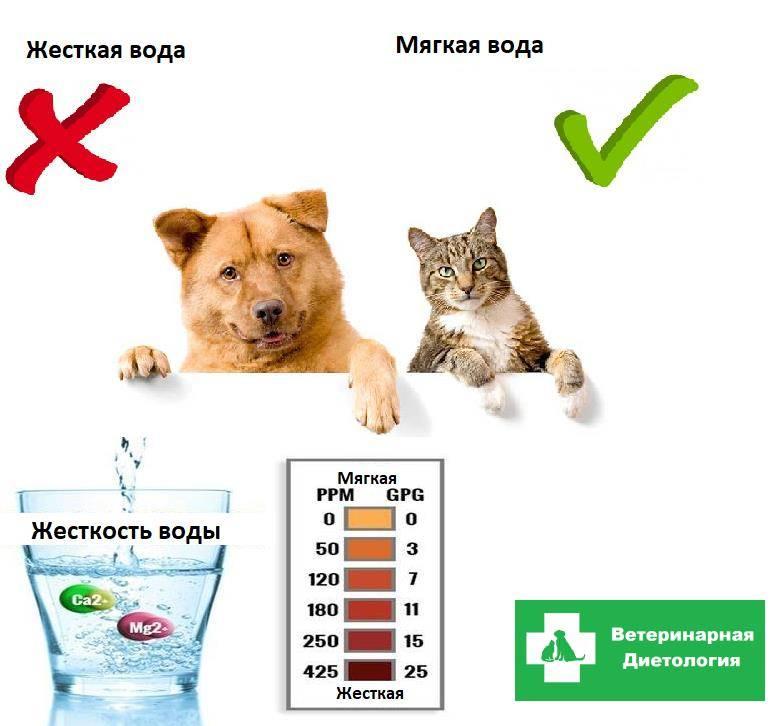 Сколько кот должен пить воды в день   сколько может прожить