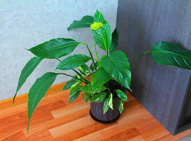 Домашние комнатные растения: как выбрать растения которые безопасны для животных и улучшат экологию дома + видео