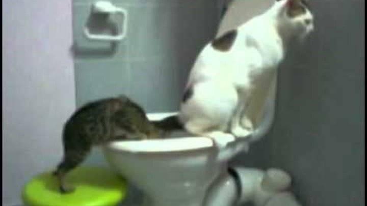 Кот не может пописать, что делать в домашних условиях: долго сидит на лотке безрезультатно, первая помощь и возможное лечение