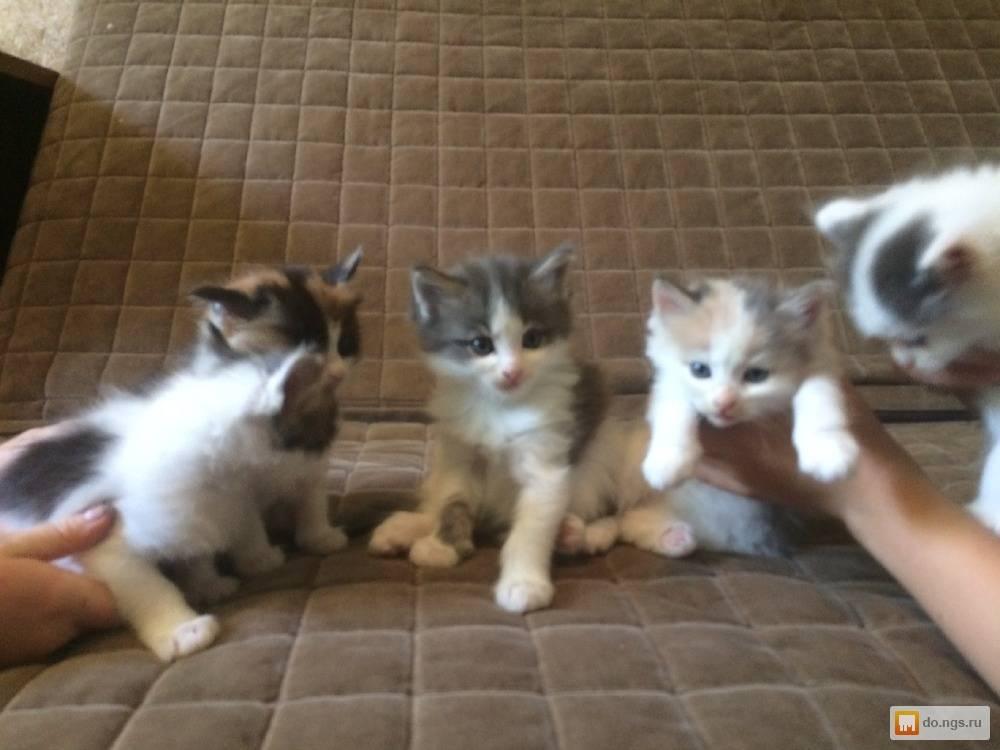 В каком возрасте можно забирать котят от кошки, когда их лучше отдавать?