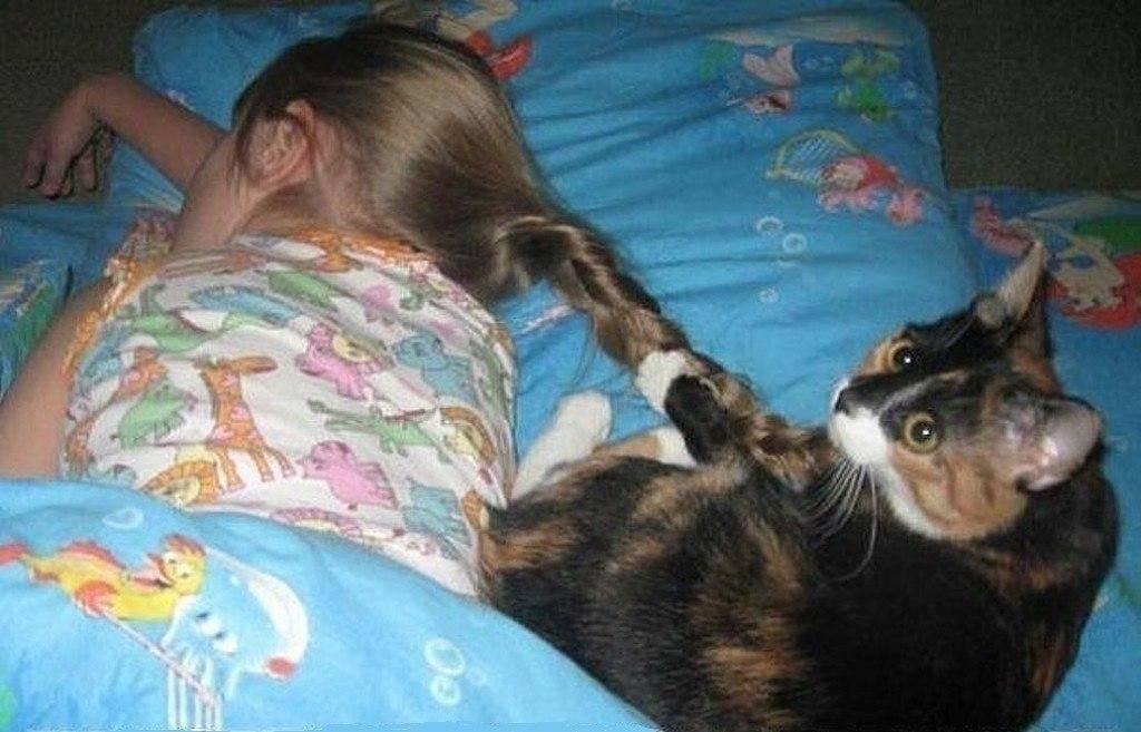 Кот не дает спать по ночам – что делать, как приучить его отдыхать, а не играть и беситься?