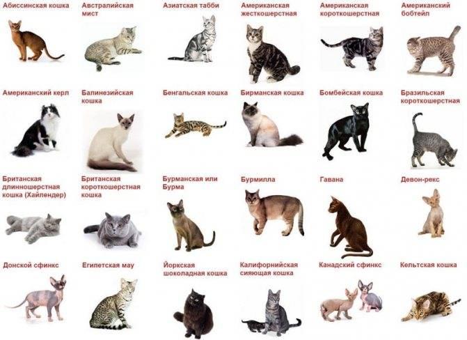 Как отличить кота от кошки и определить пол котёнка?