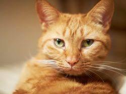 Пушистое солнце: как назвать рыжего котенка