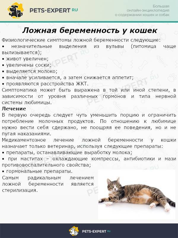 Признаки ложной беременность у кошки