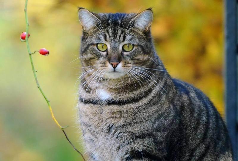 У кошки перхоть:причины, лечение и профилактика