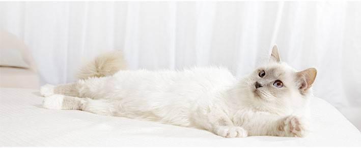Укол кошке от гуляния. гормональный укол кошке от течки — опасность и вред