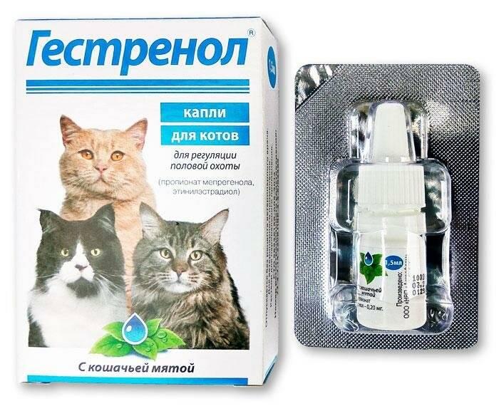 Подробная инструкция по применению капель гестренол для кошек
