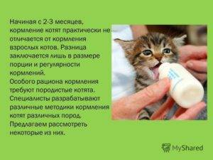 Чем кормить котенка в 1,5 месяца: первый прикорм, натуральные или промышленные корма, смеси и молочные заменители