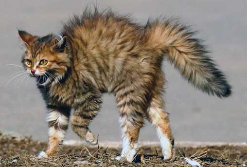 Кожные заболевания у кошек: фото и лечение. топ-10 болезней кожи кошек
