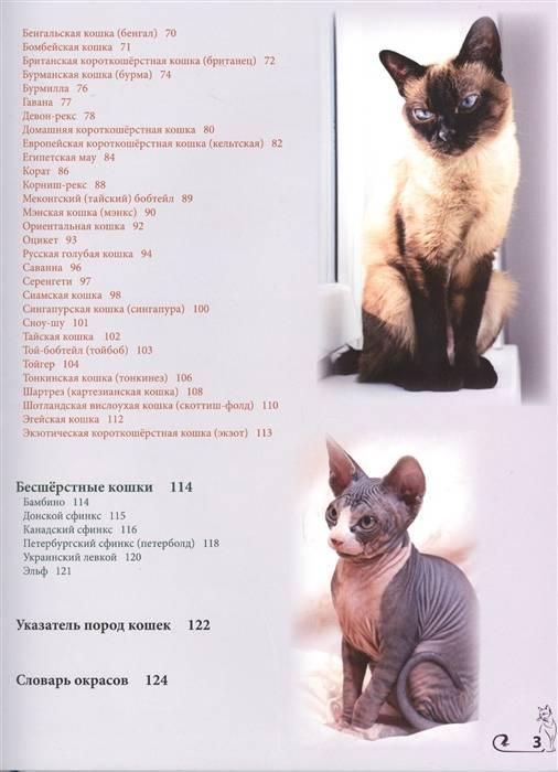 Кошка эльф сфинкс: описание породы и характера