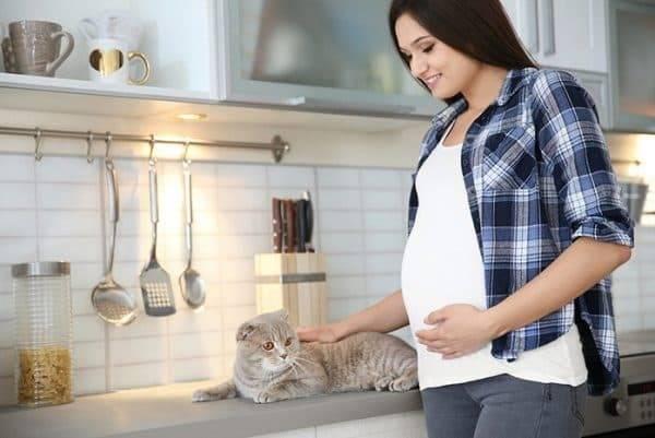 Приметы для беременных с кошками
