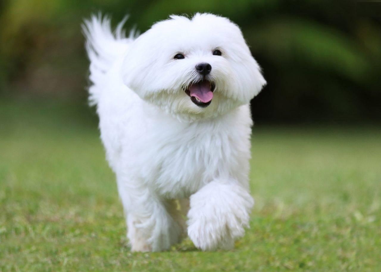 Большие породы собак топ-30: названия с описанием и фото
