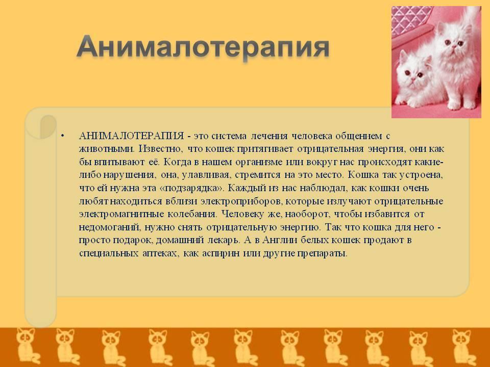 Фелинотерапия (кошкотерапия): кошки лечат болезни людей