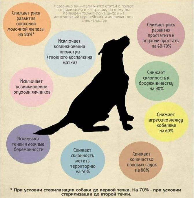 Виды, способы и методы кастрации котов: плюсы и минусы каждого из них