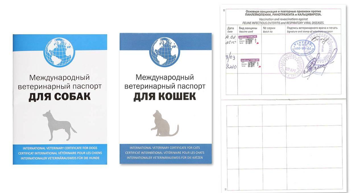 Перевозка кошек и котов - какие нужны документы для перевозки | caticat.ru