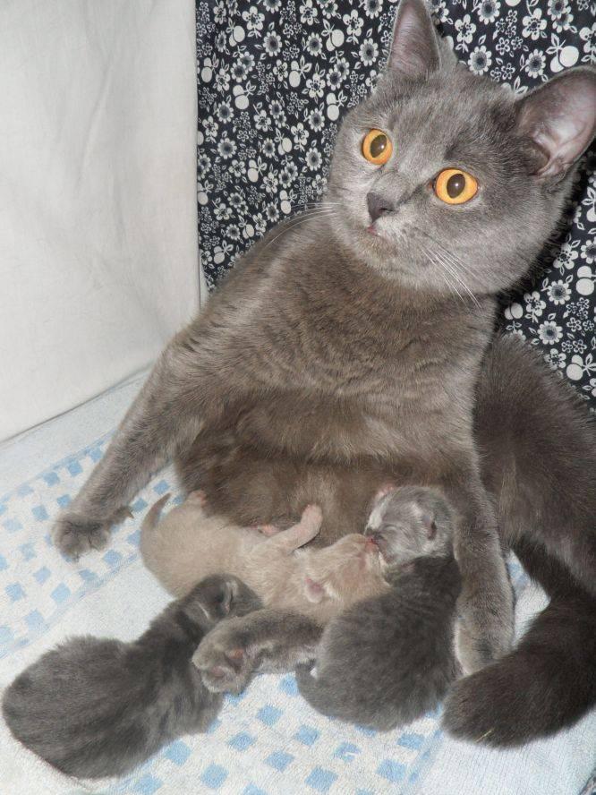 Кошка гуляется каждый месяц. почему молодая кошка начала гулять. домашние питомцы: сколько дней гуляет кошка - новая медицина
