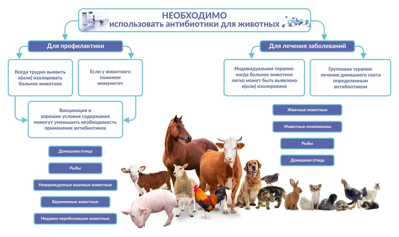 Виды антибиотиков для кошек и их назначение