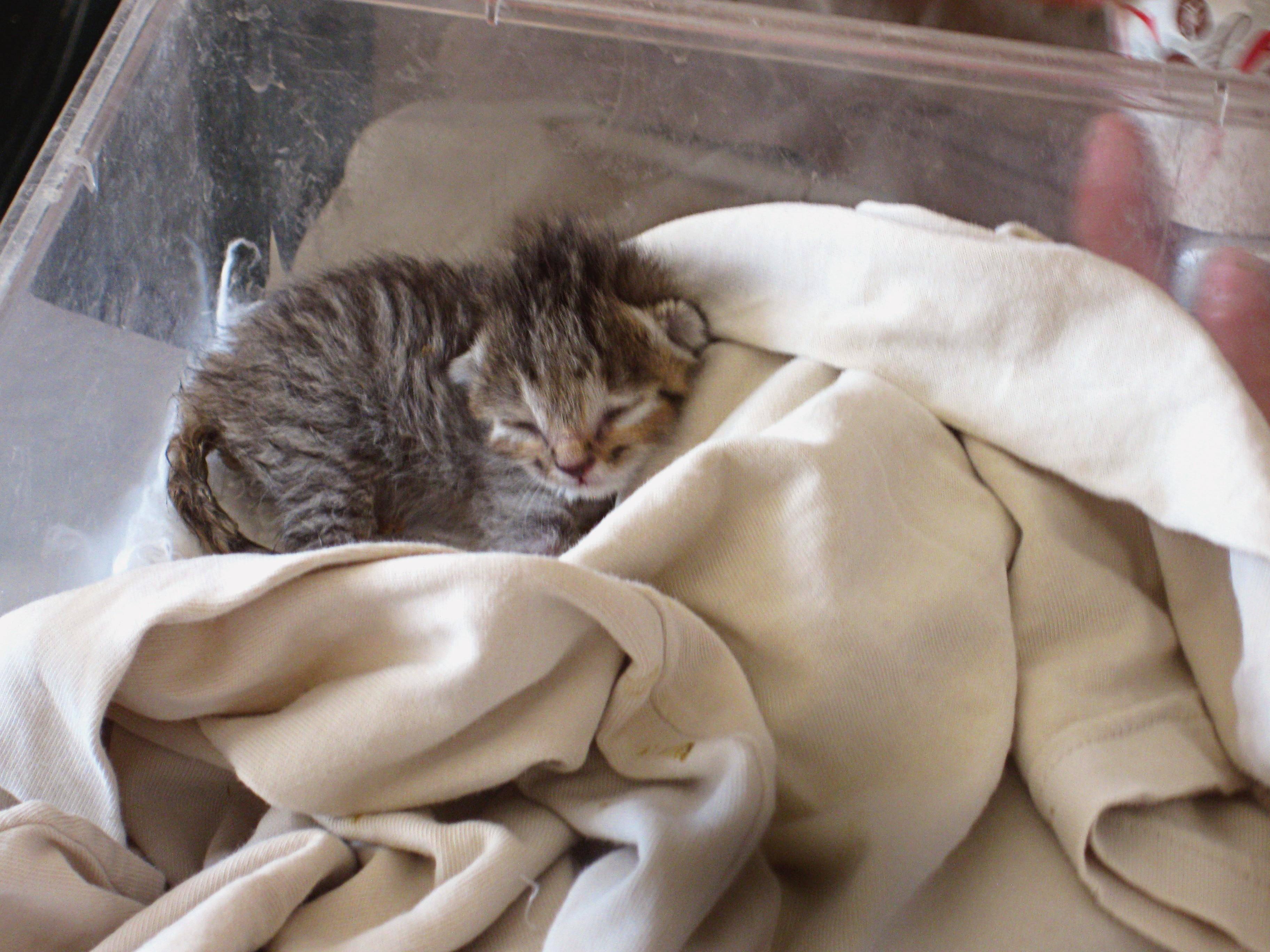 Какая должна быть температура тела у кошки