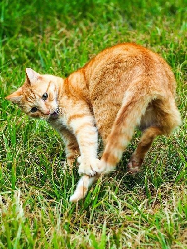 Причины виляния хвостом у кошек: когда лежит, когда гладят и другие примеры