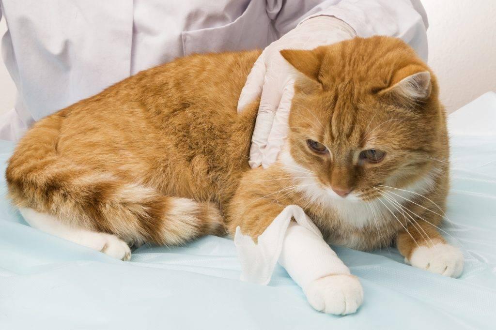 Насморк у кошки и как его лечить