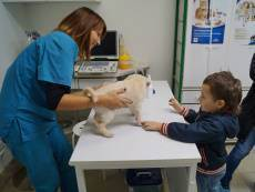 Ветеринарная клиникатолстый лори