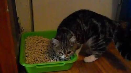 Котенок не какает - запись пользователя snitch (id825711) в сообществе домашние животные в категории кошки. болезни, прививки, советы по уходу - babyblog.ru