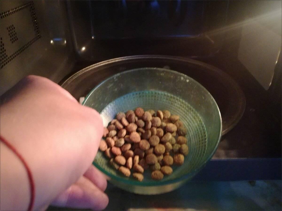 Как размачивать сухой корм для котят