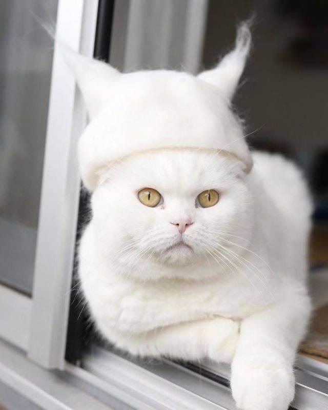 Зачем нужен фурминатор для кошек