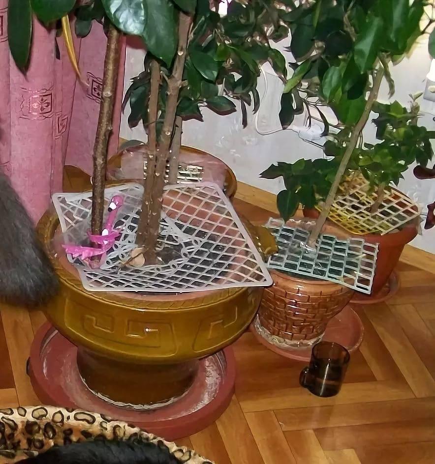 Комнатные растения, безопасные для кошек | муркотики