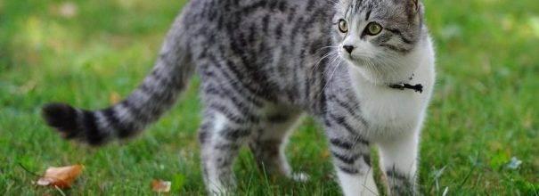 Лечим цистит у кошек: что нужно знать владельцу