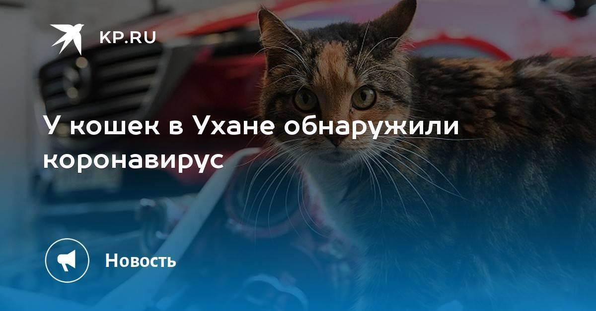 Сахарный диабет у кошки: симптомы, лечение, профилактика | ветеринарная служба владимирской области