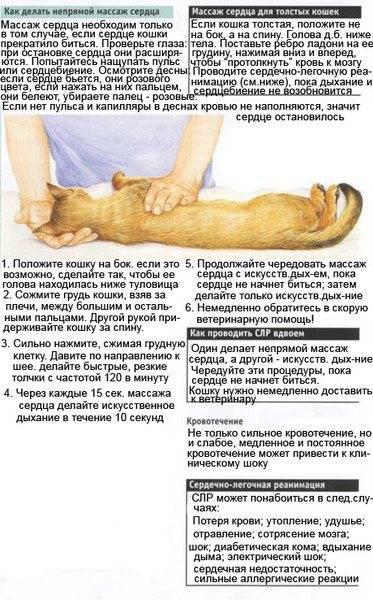 Что делать если кот часто дышит?