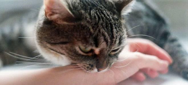Кошка нападает и кусает за руку