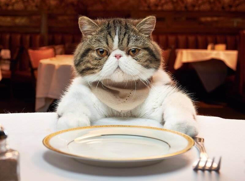 Вредные продукты для кошек