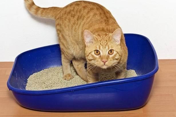А вы знаете, почему кошка постоянно мяукает, привлекая к себе внимание?