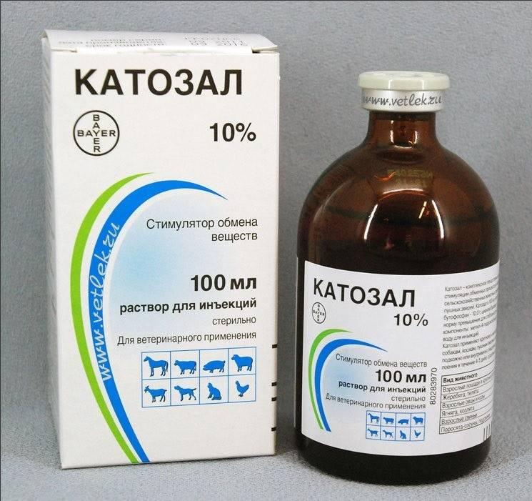 Капли таблетки и другие средства для кошек во время течки