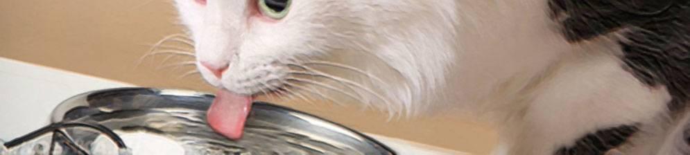 Сколько кот может не есть при болезни - муркин дом