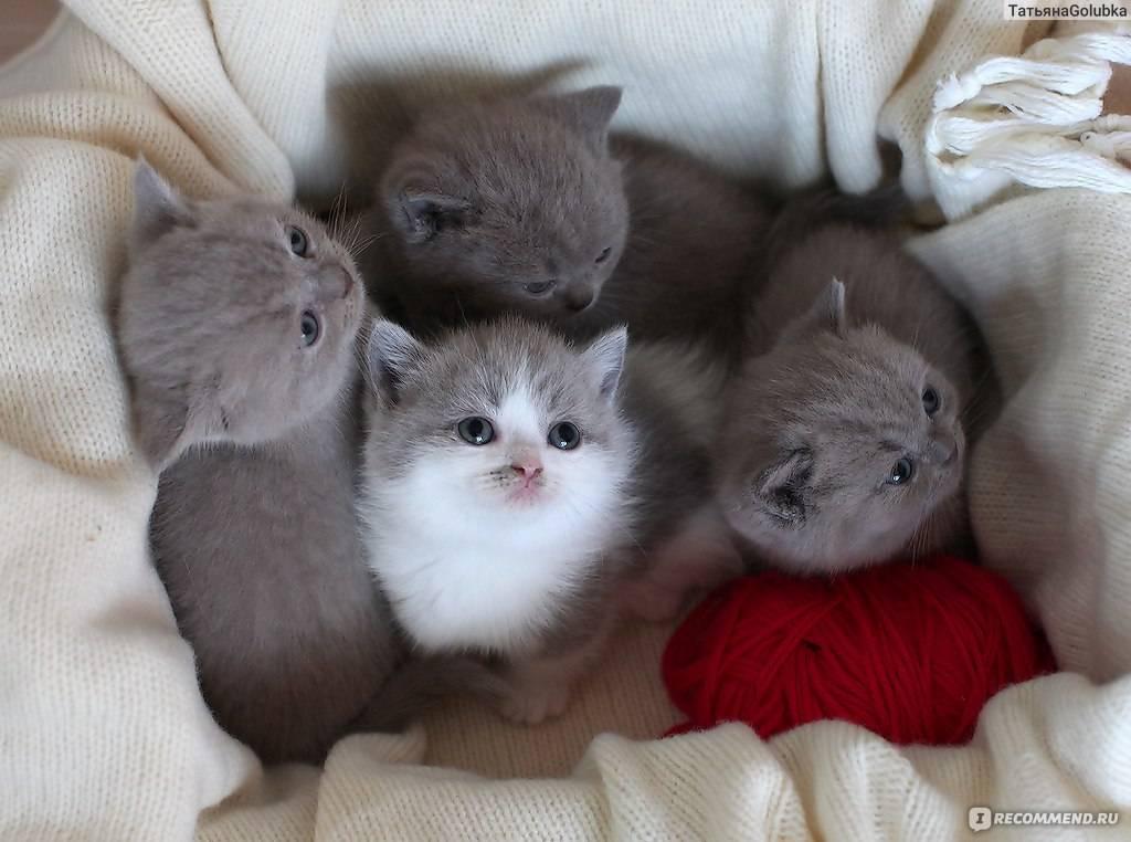 Маленькие породы кошек: список с фотографиями и названиями
