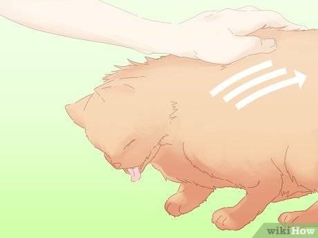 Кот кашляет и хрипит, вытягиваясь и прижимаясь к полу: причины и лечение