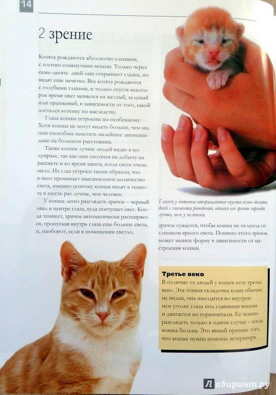 Как воспитывать котенка?