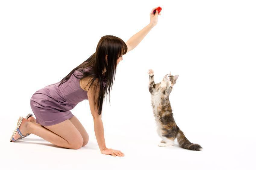 Как научить кошку давать лапу? есть несколько способов!