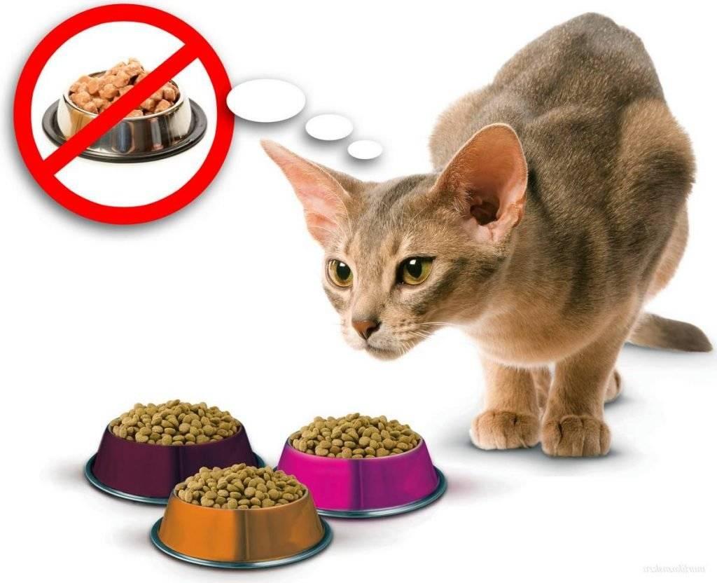 Собака перестала есть сухой корм: что делать?