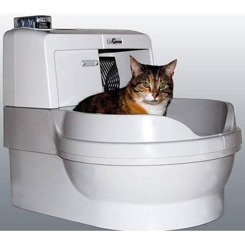 Какой туалет для кошки лучше – автоматический кошачий унитаз со сливом, самоубирающийся или сделанный своими руками?