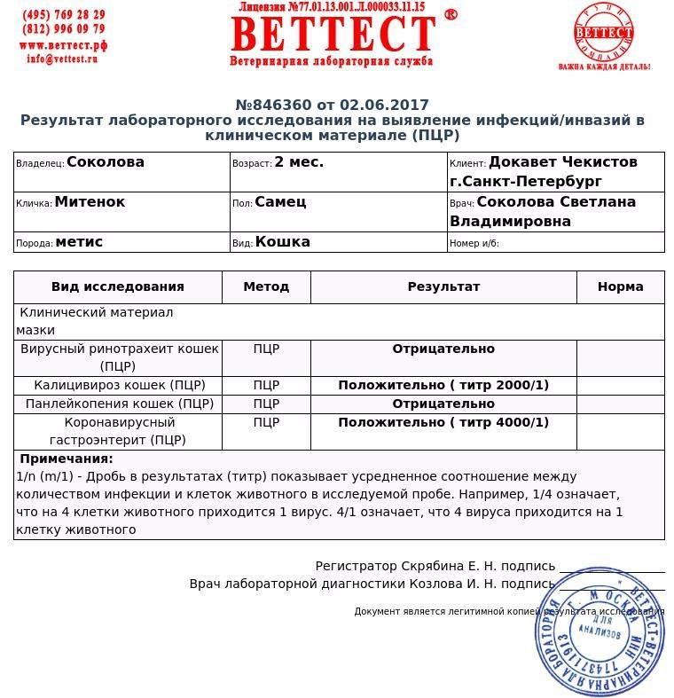 """Коронавирус у кошек - симптомы, лечение коронавирусного энтерита кошек в москве . ветеринарная клиника """"зоостатус"""""""