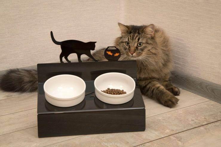 Правильная миска у кошки: какой должна быть