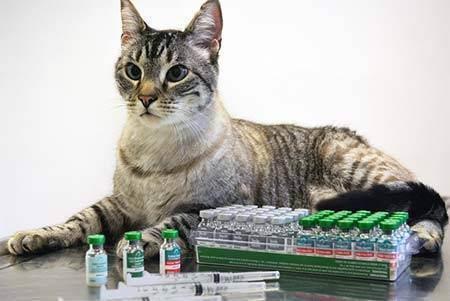 Вакцины для комплексной вакцинации кошек: что в них входит и от чего защищает такая прививка?