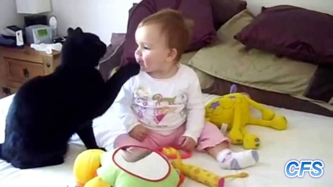 Фото и развитие британского котенка в 1-12 месяце