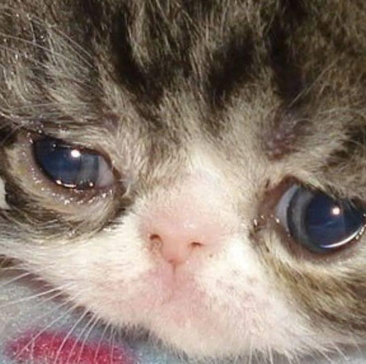 Могут ли кошки плакать?