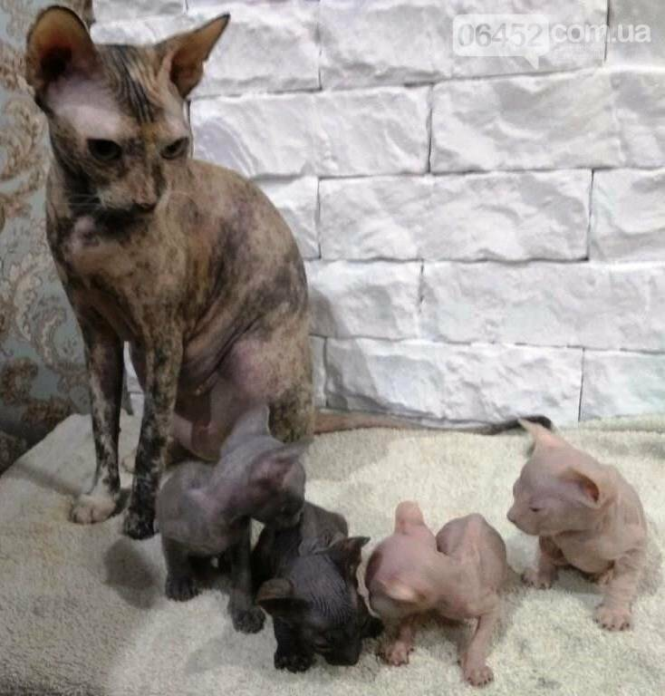Как кормить беременную кошку